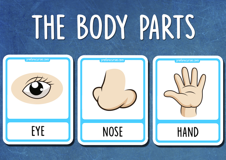 Body Parts Flashcards