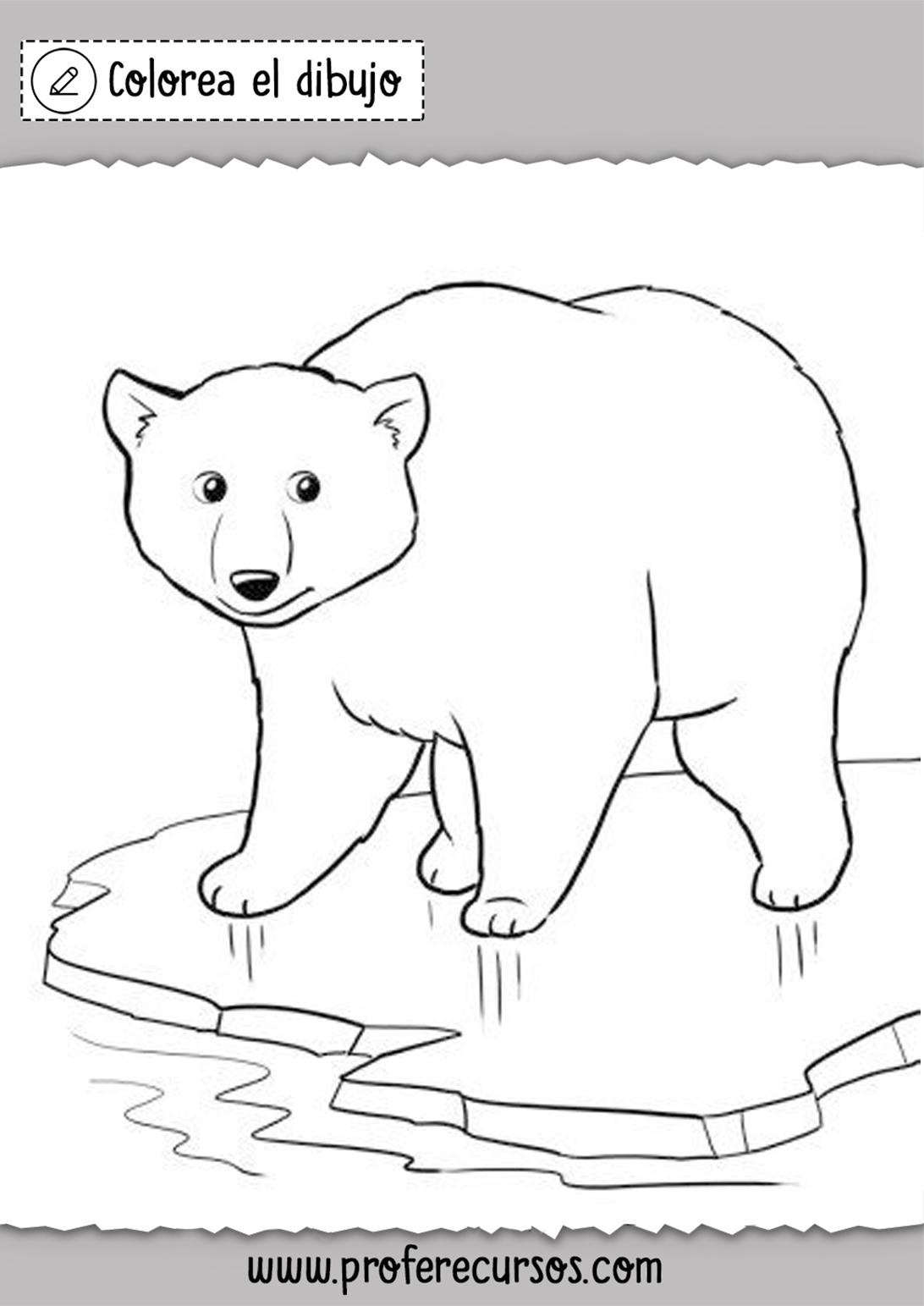 Colorear Oso Polar Dibujo