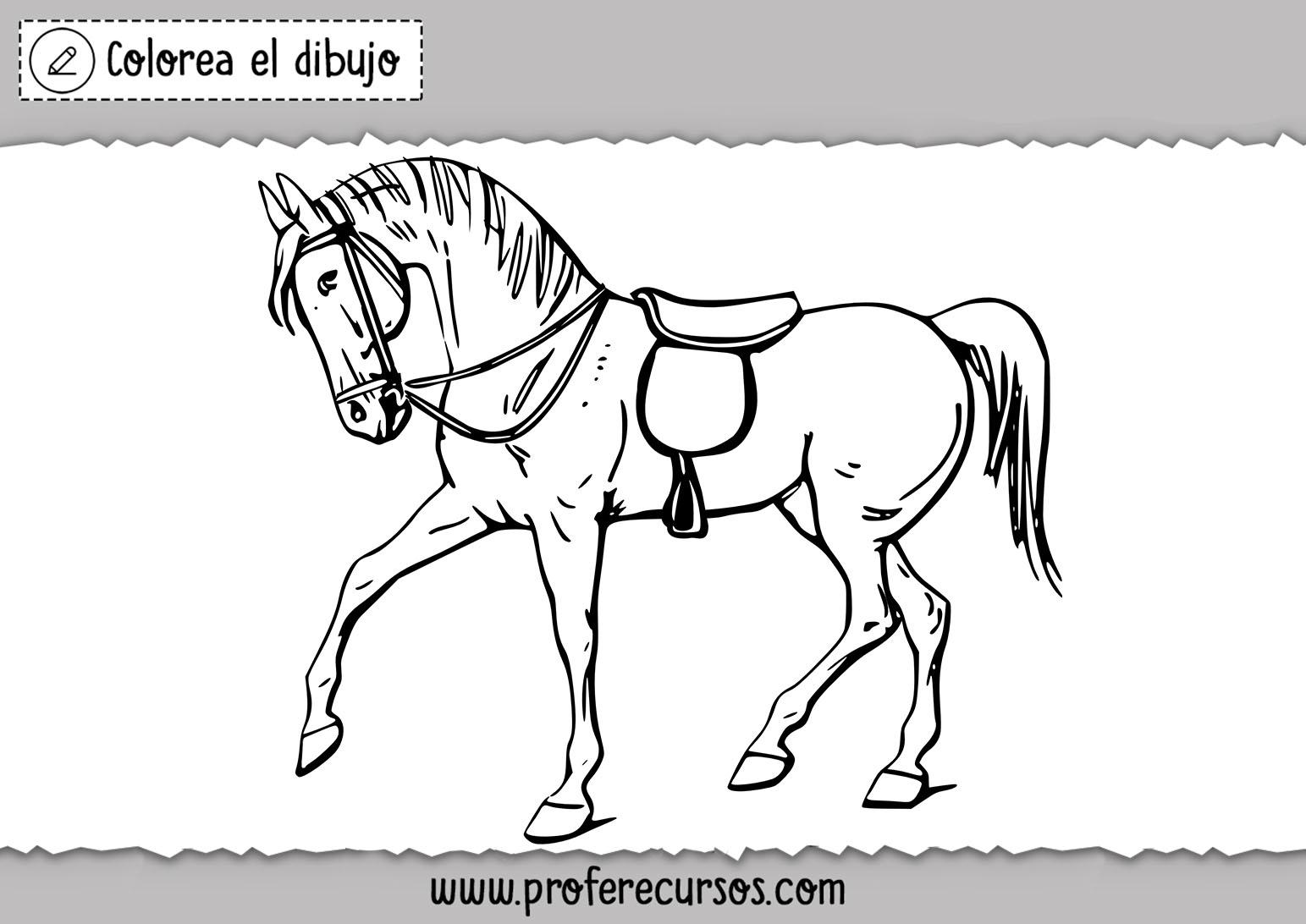 Colorear dibujo de caballo