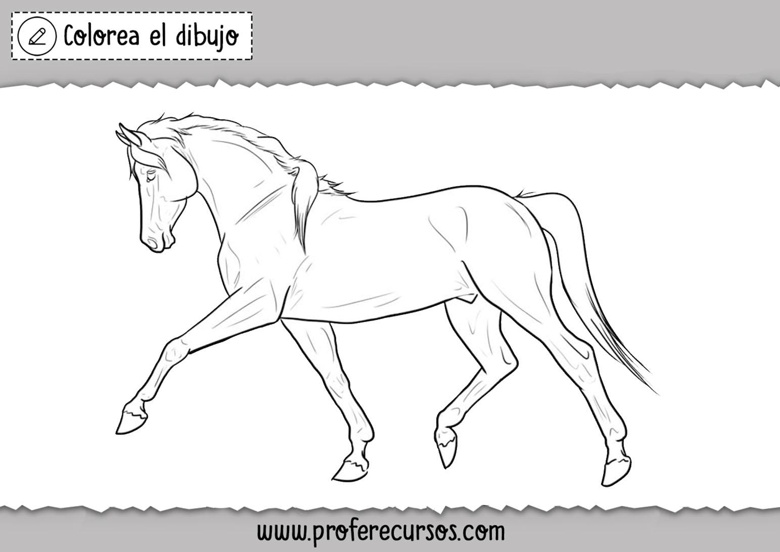 Colorear imagenes de caballos