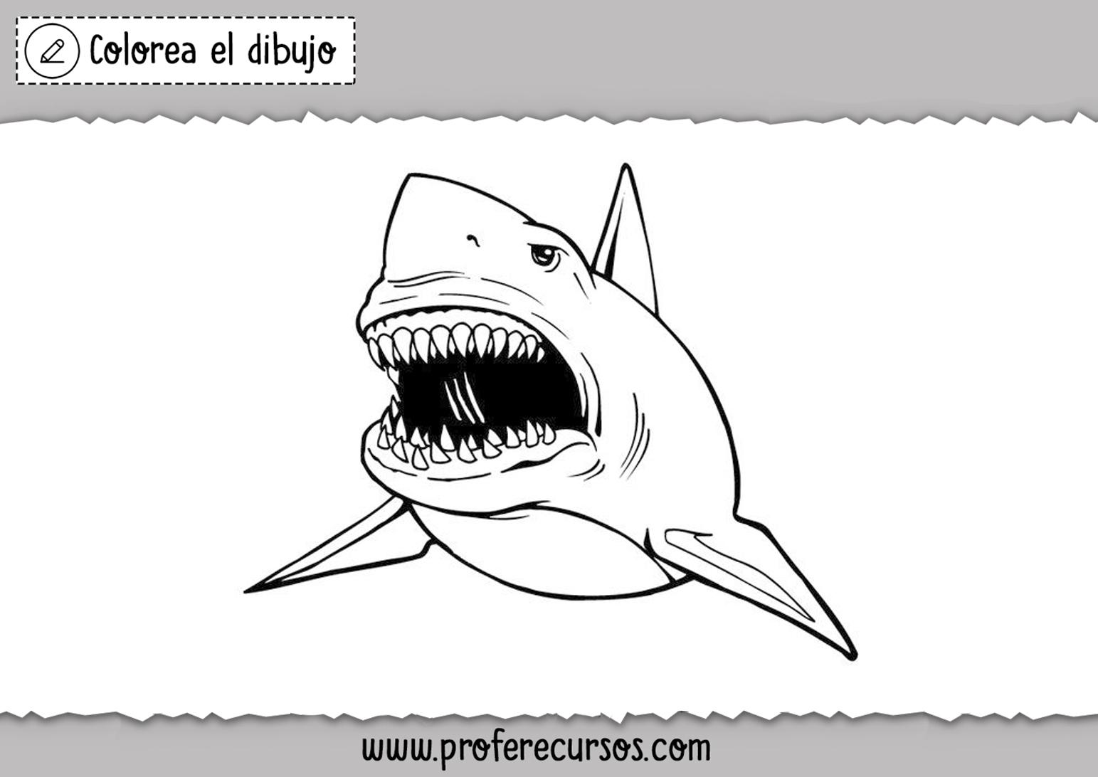 Dibujo Tiburon Blanco