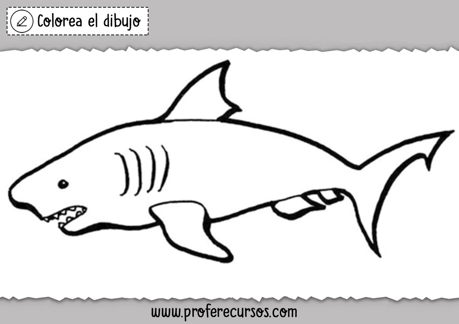 Dibujo Tiburon para Niños