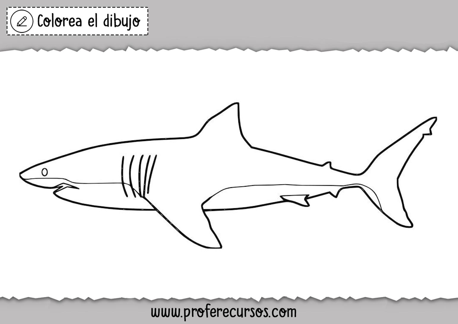 Dibujo de Tiburon