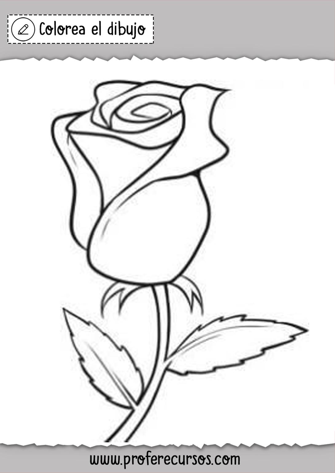 Dibujos Rosas Colorear