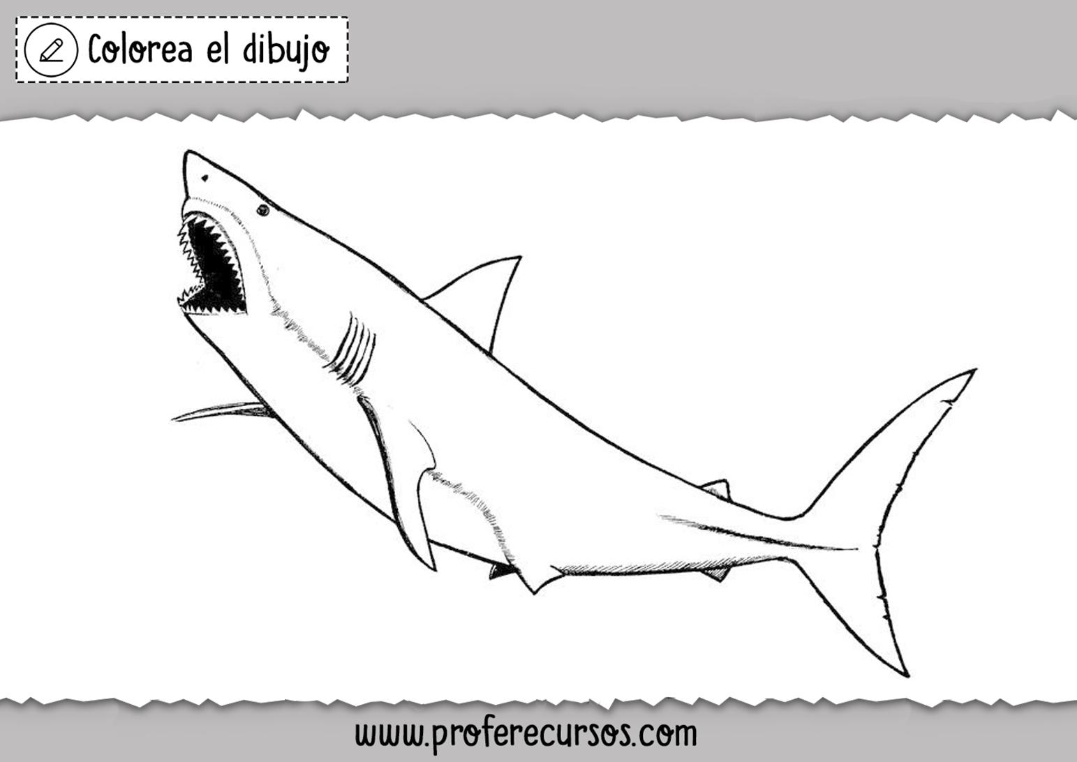 Dibujos Tiburones Colorear