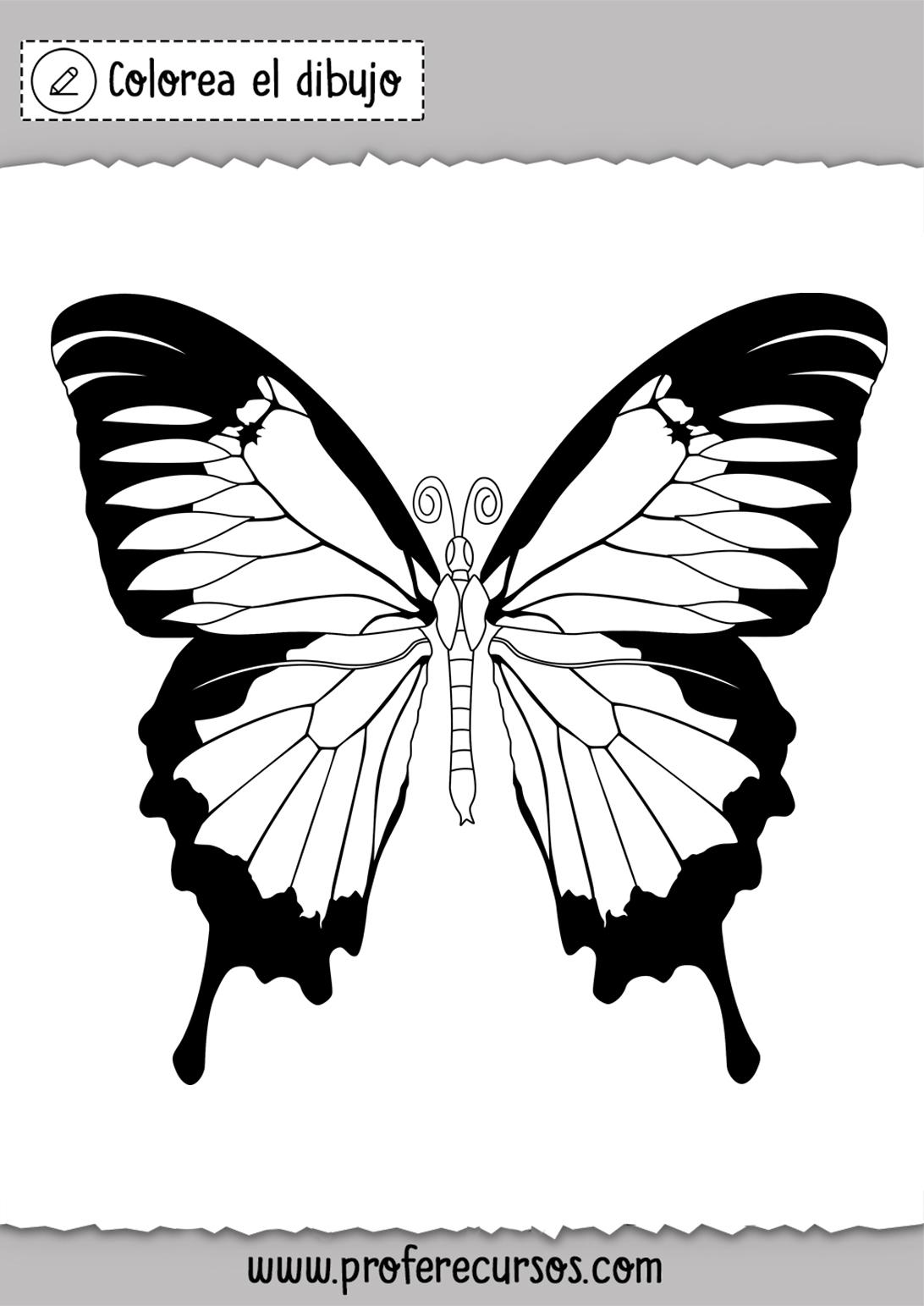 Mariposa para Pintar