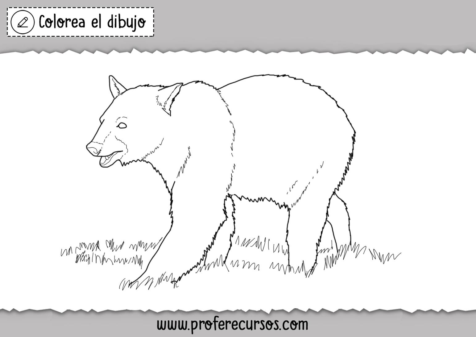 Oso Grizly para Colorear