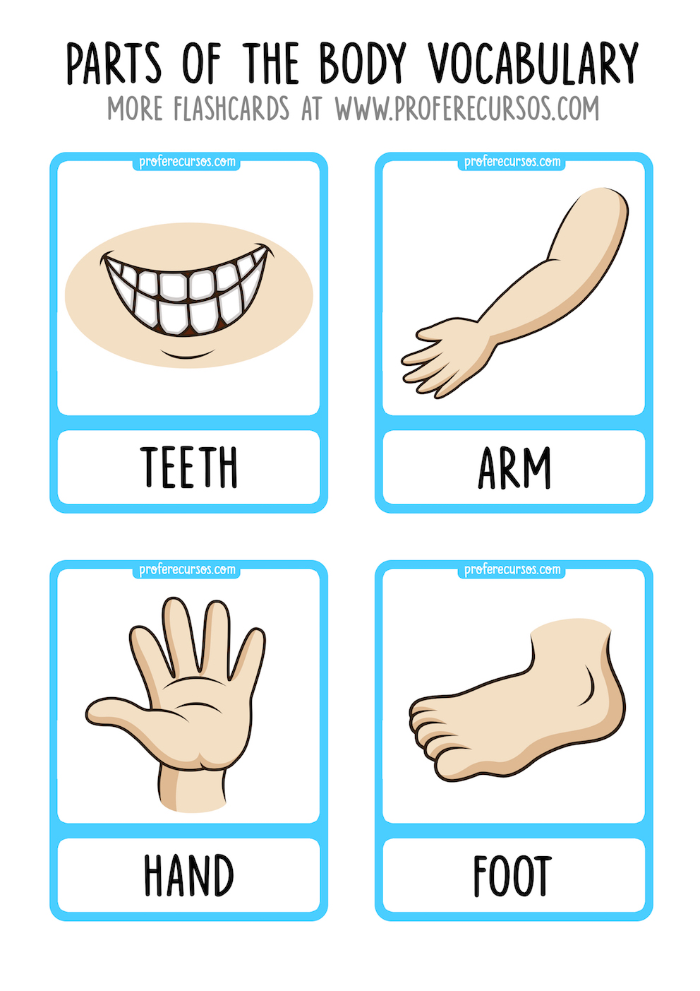 Parts of the Body Vocabulary Flashcards