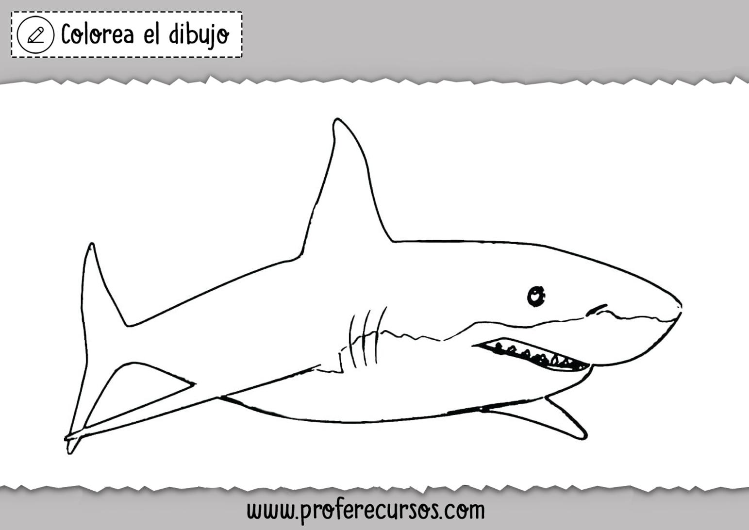 Tiburon para Pintar y colorear