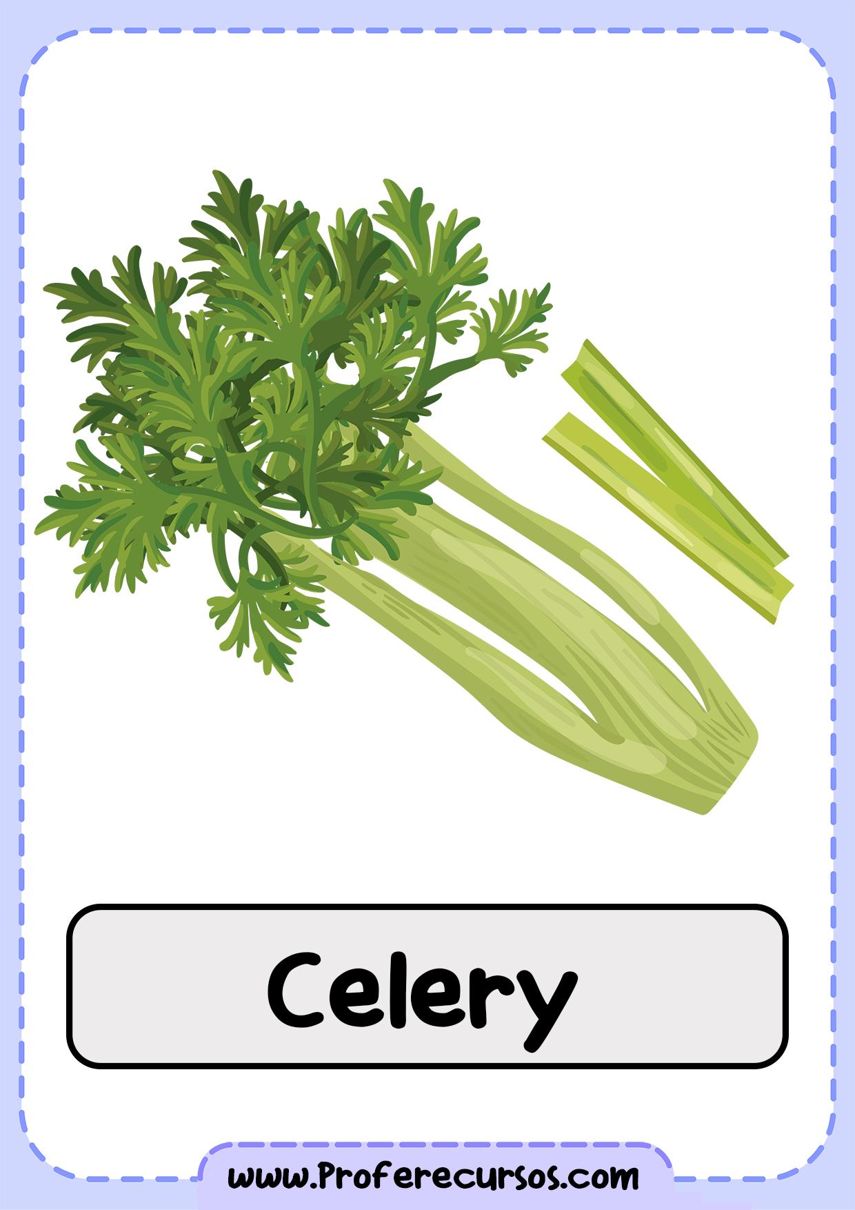 Vegetables-Vocabulary-Celery